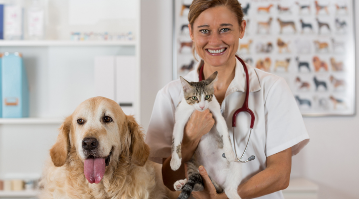 Email Marketing for Veterinary and Animal Clinics